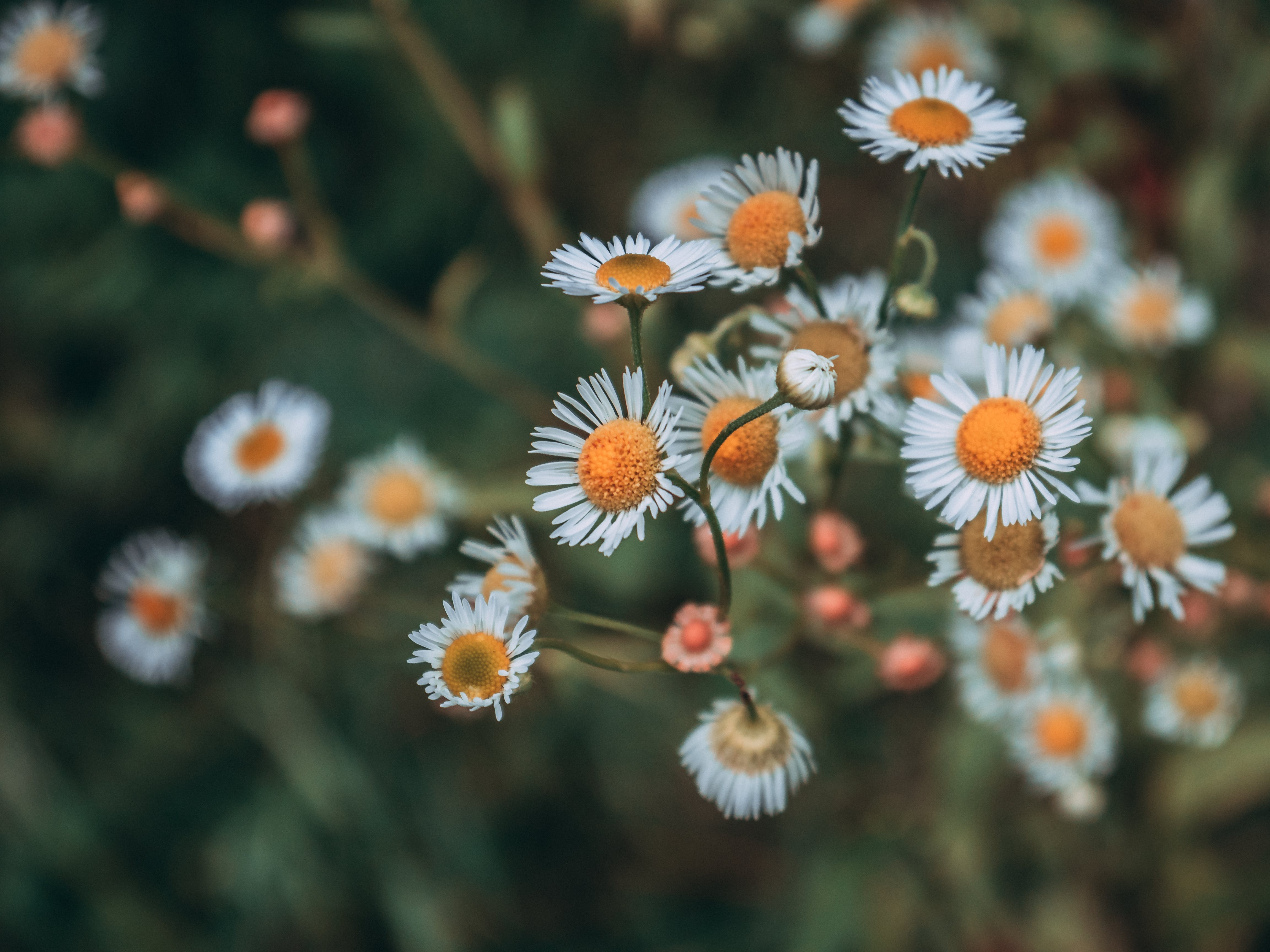 Selective Focus Photography of White-and-orange Petaled Flower Plant