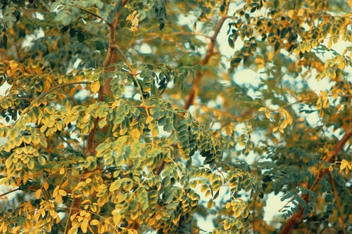 Immagine gratuita di albero, albero di bacchetta, ambiente, colore
