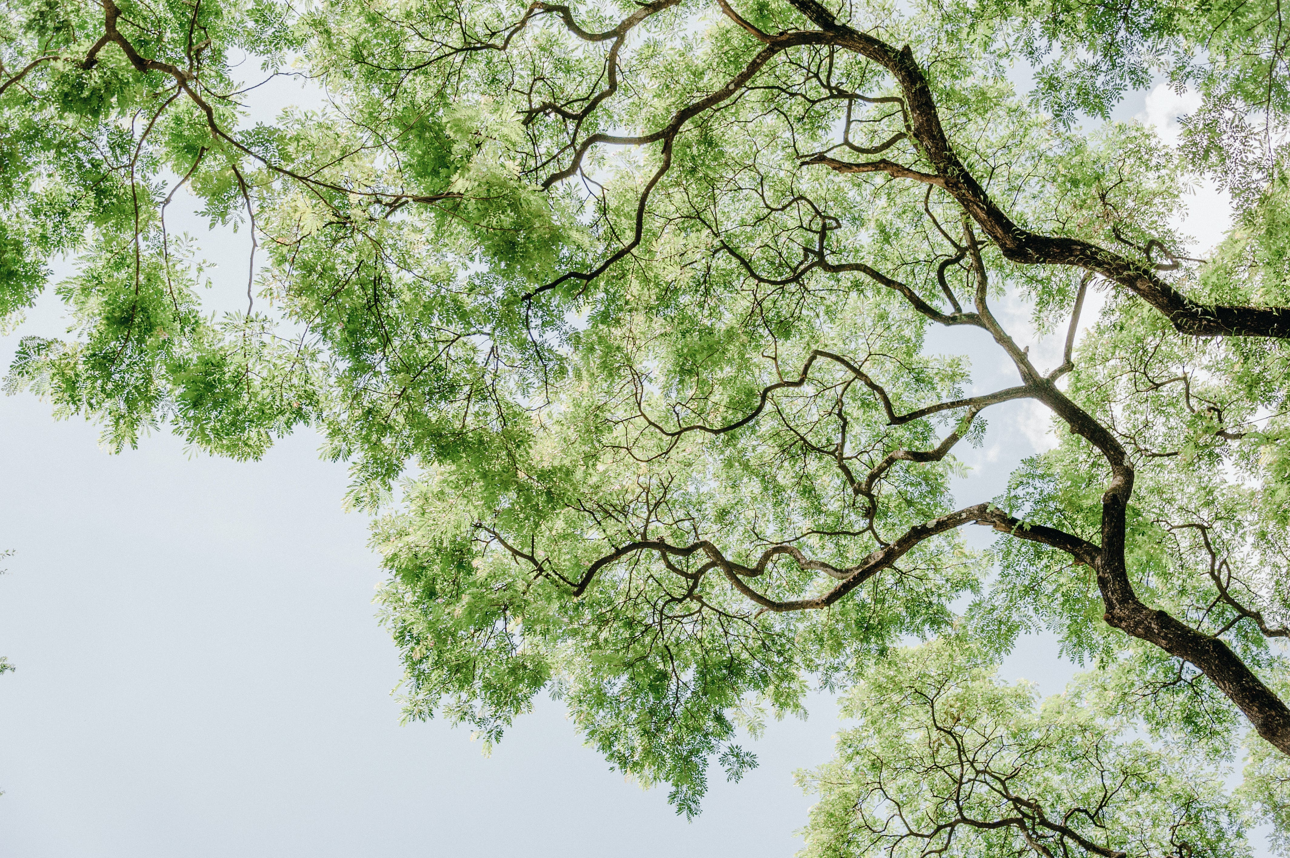 Green Leafed Tree Low Angle Photography