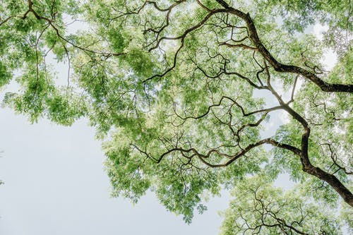 Kostnadsfri bild av dagsljus, färg, gren, lågvinkelfoto