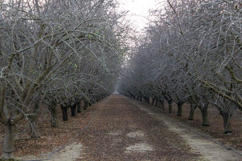 Δωρεάν στοκ φωτογραφιών με δέντρα