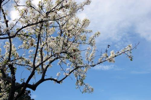 Δωρεάν στοκ φωτογραφιών με δέντρο, λουλούδια, φύση