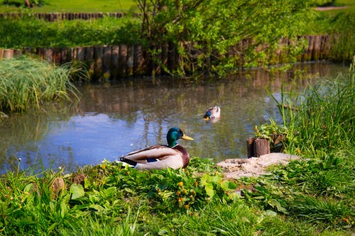 Δωρεάν στοκ φωτογραφιών με άγρια φύση, άγριος, αντανακλάσεις, γρασίδι
