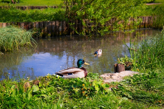 Nature wallpaper of landscape, nature, water, animal