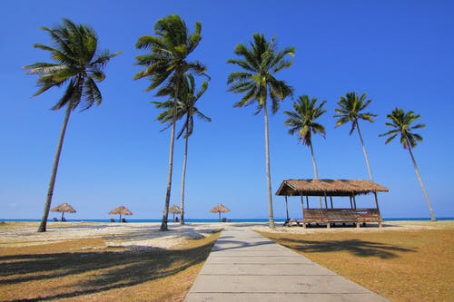 Coconut Trees Lined Near Sea at Daytime