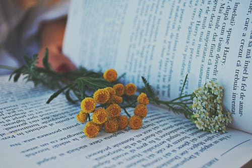 Flowers On Book
