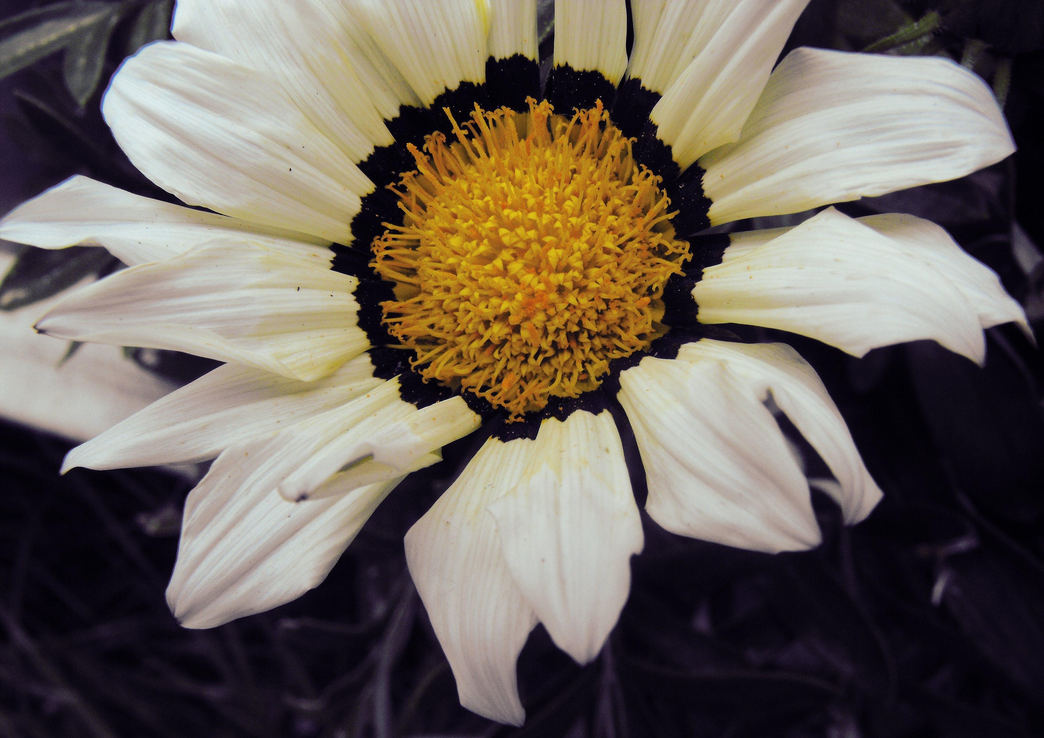 Free stock photo of detail, flower, macro, petals