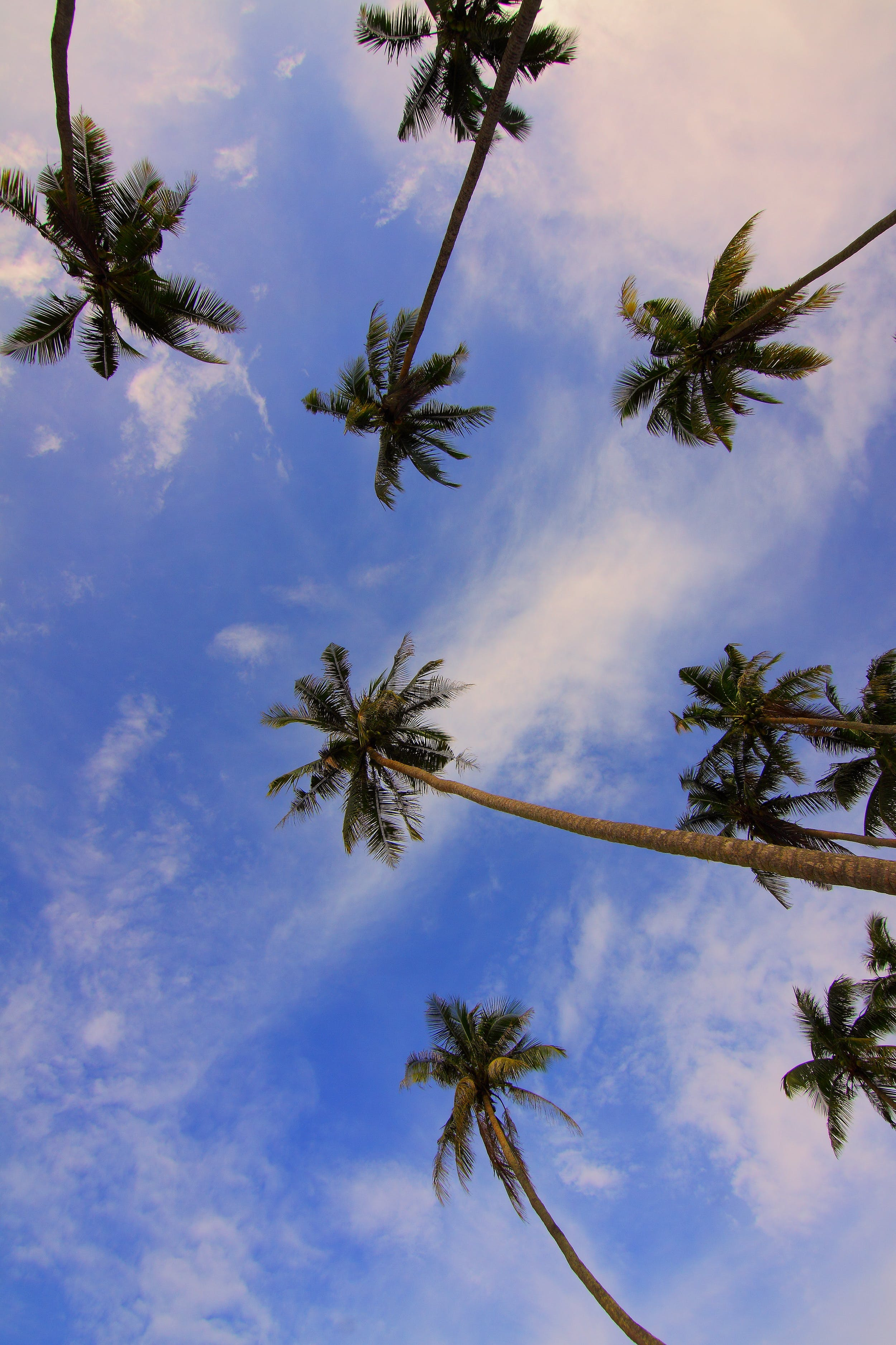 Bottom View of Palm Trees