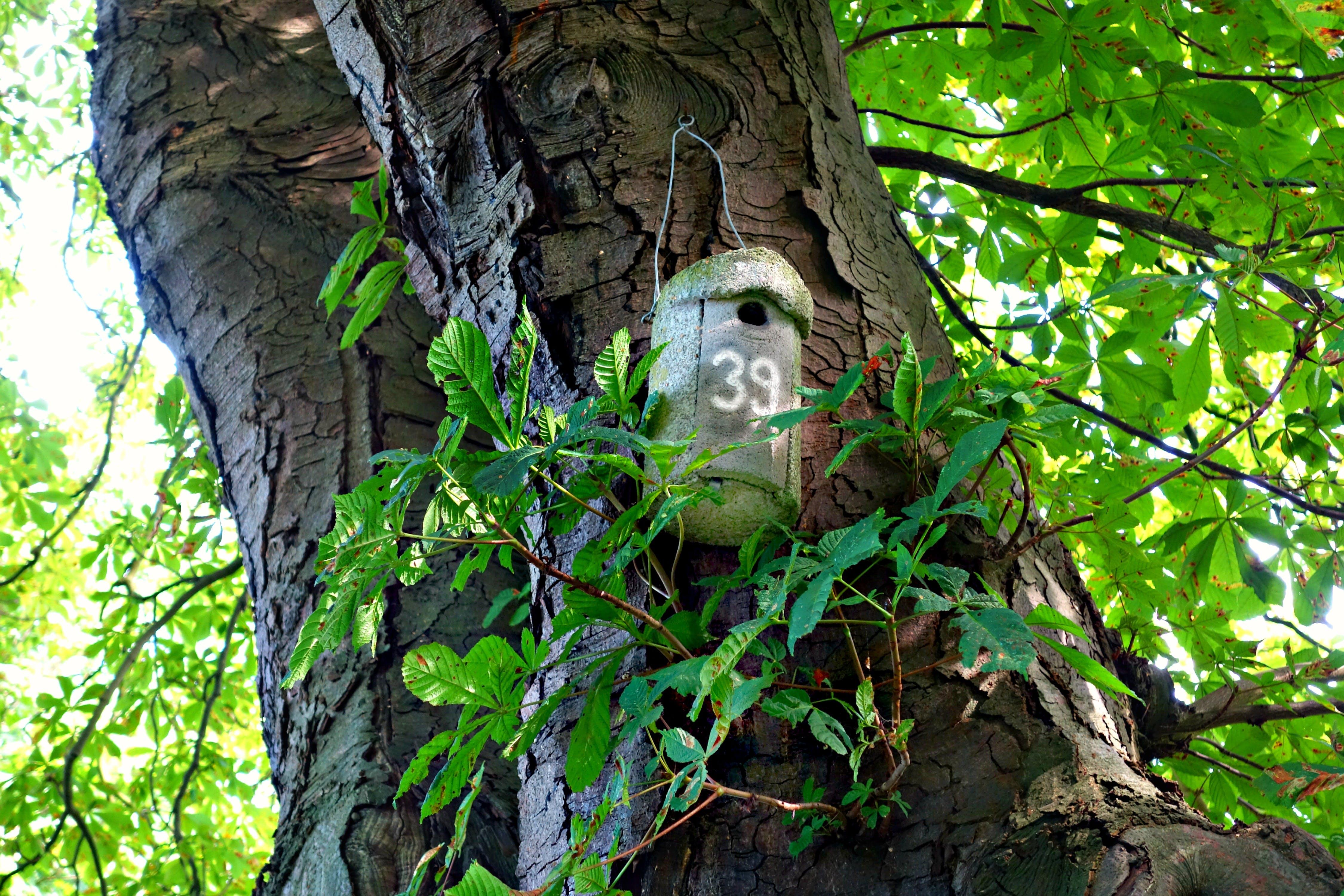 of bird box, birdhouse, breeding, brooding