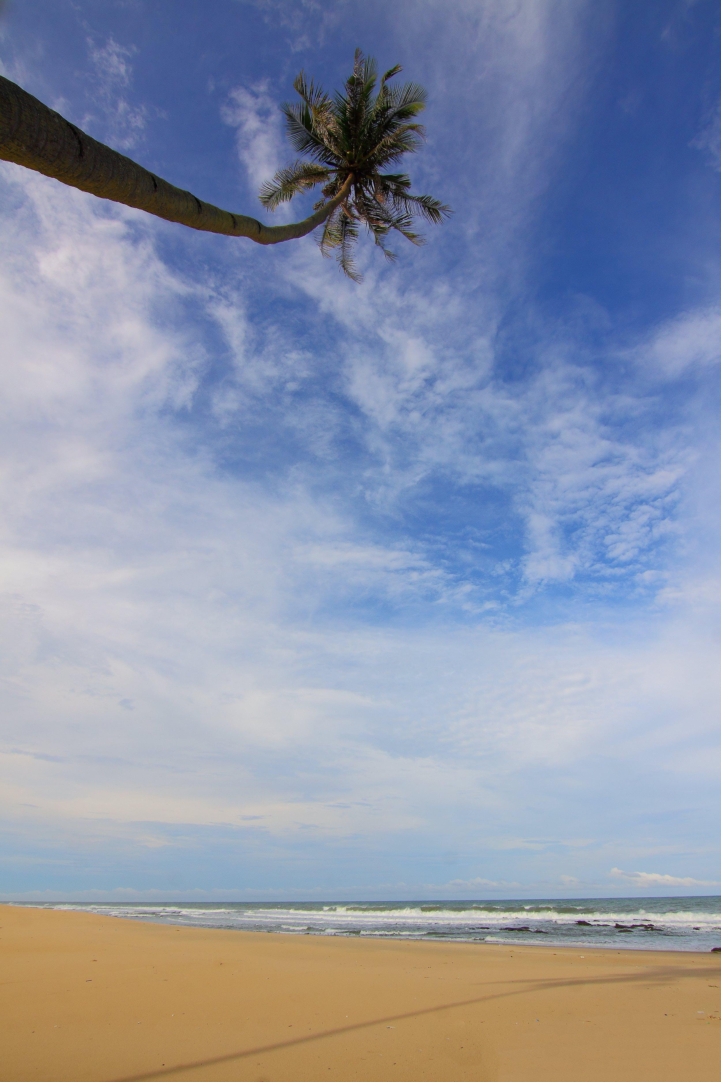 Základová fotografie zdarma na téma denní světlo, horizont, kokosová palma, krajina