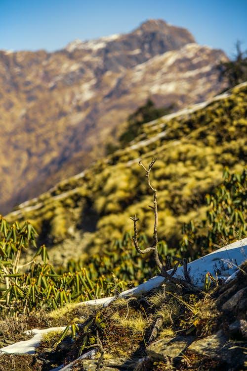 Бесплатное стоковое фото с вид, гора, дневной свет, живописный