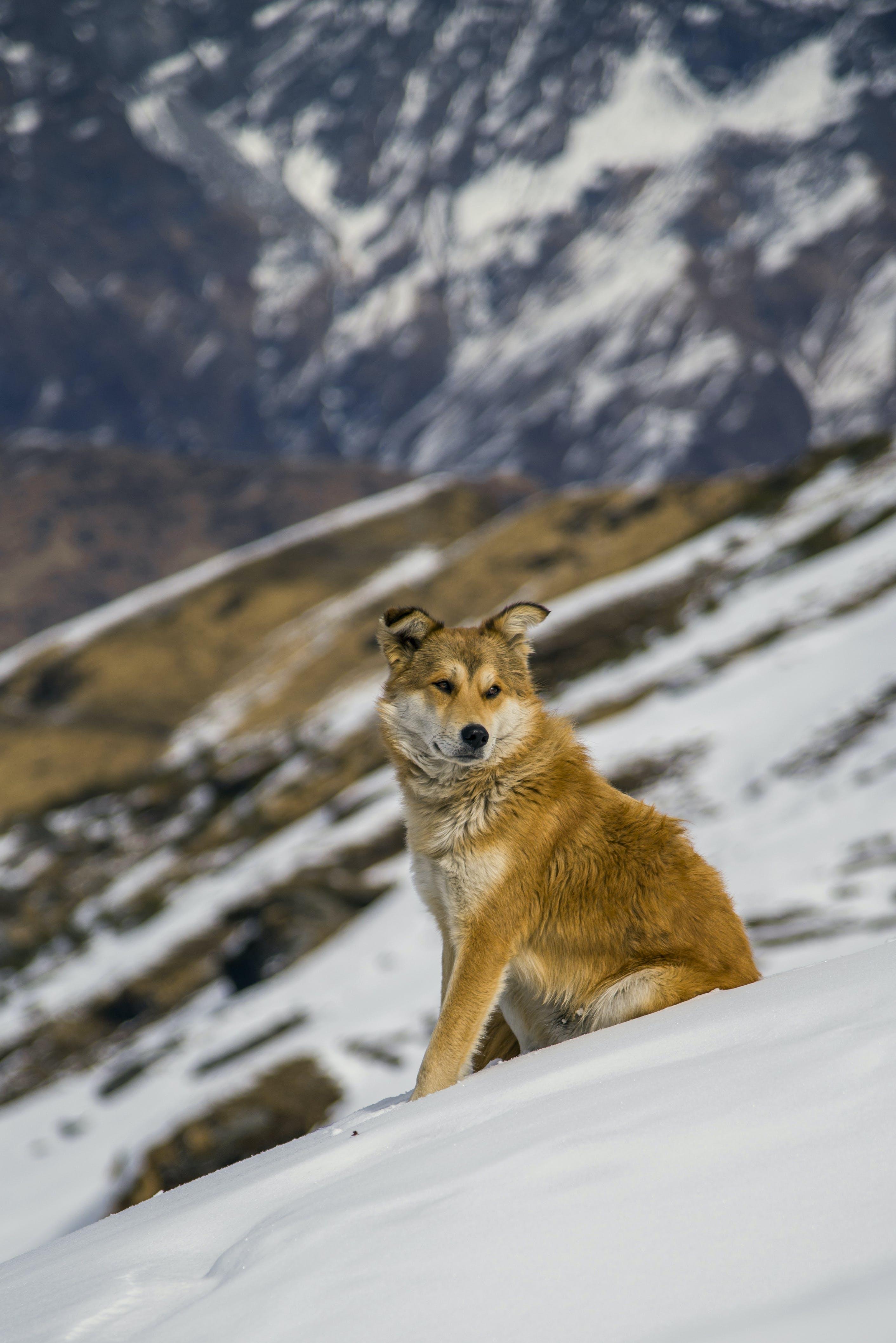 Brown Dog Sitting On Snow