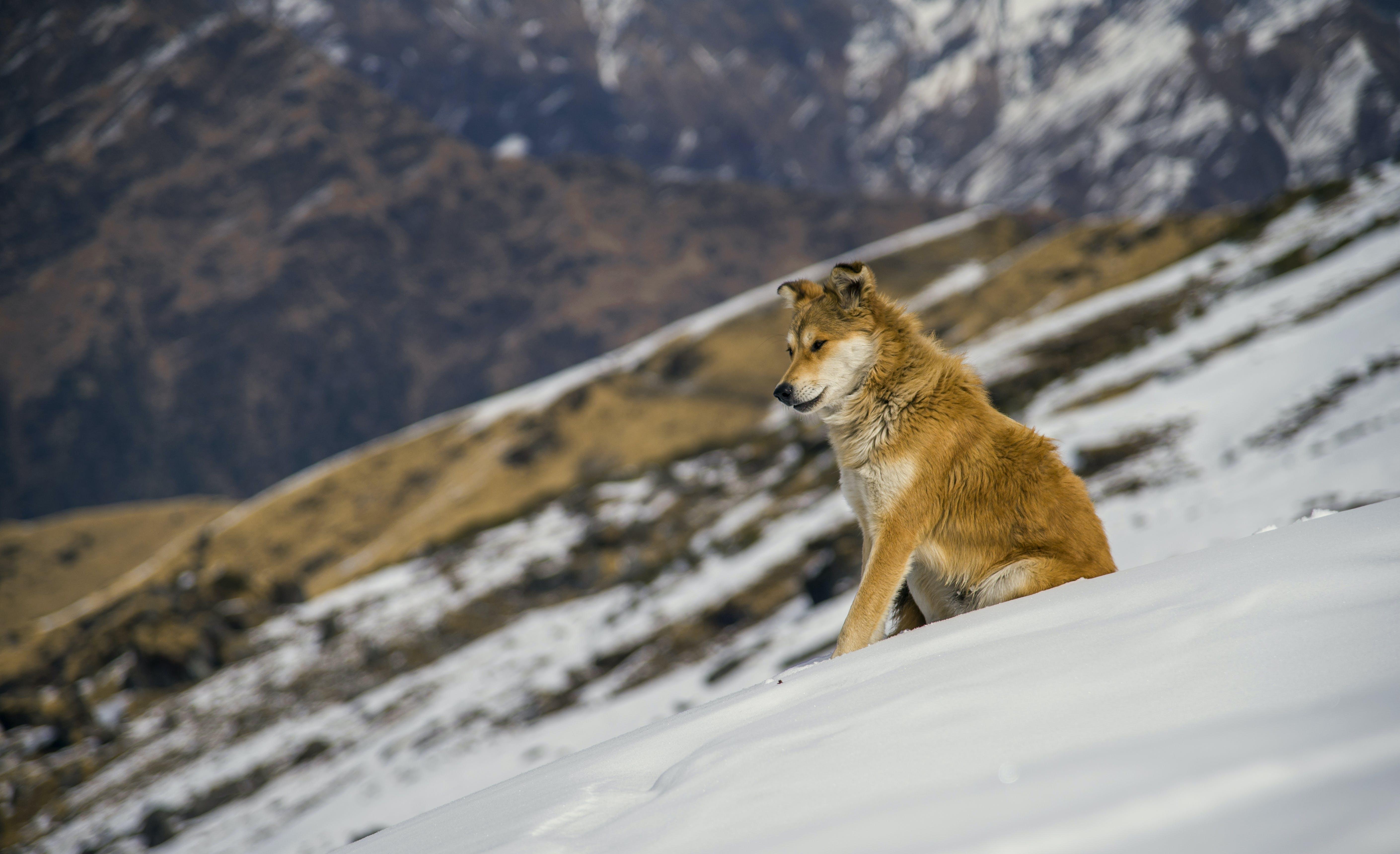 Gratis lagerfoto af bjerg, dagslys, dyr, forkølelse