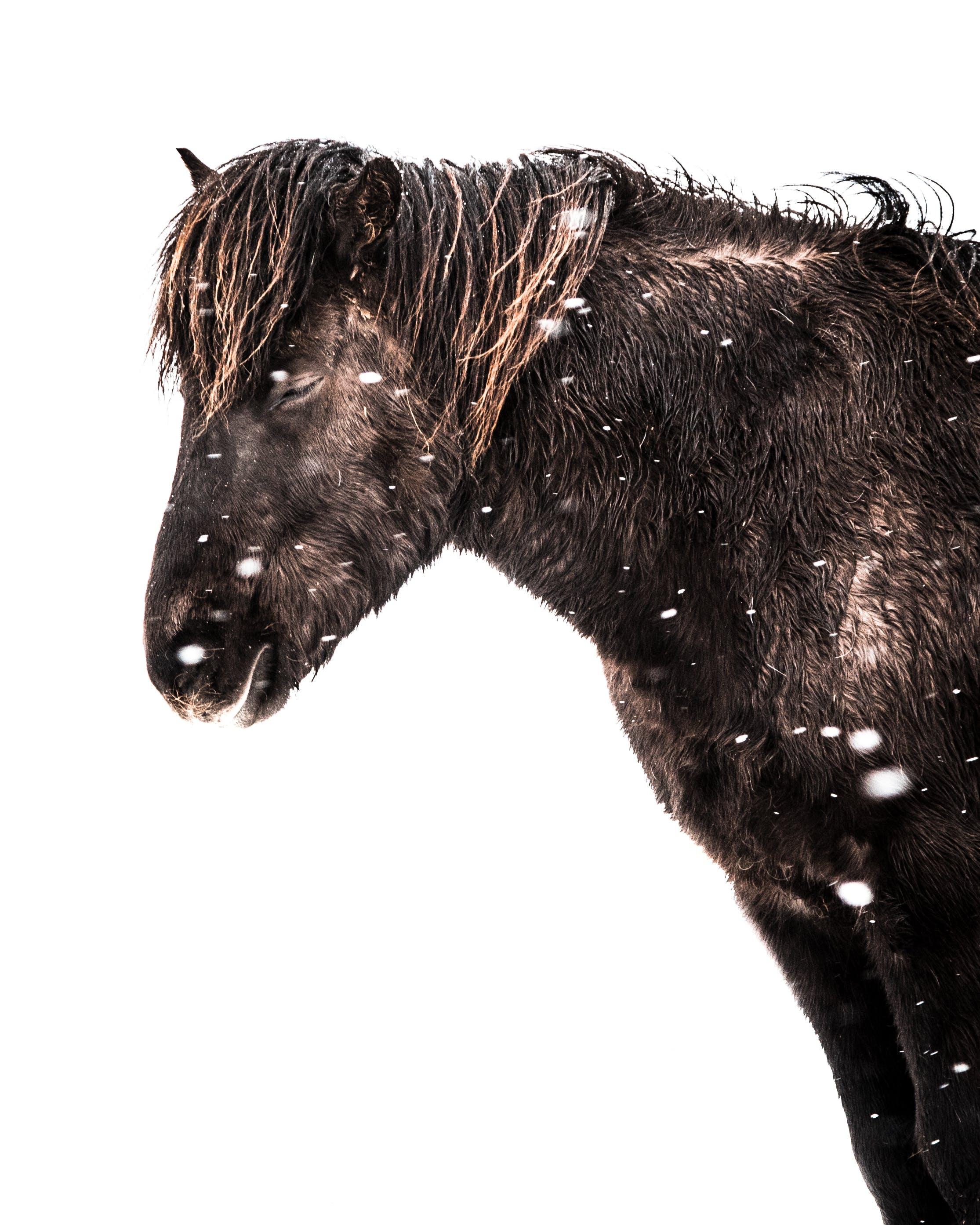 Photo Of Black Horse
