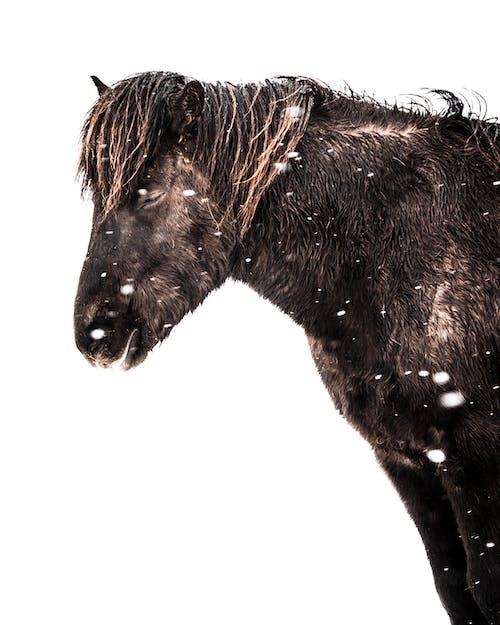 Foto stok gratis binatang, dingin, fauna, fotografi binatang