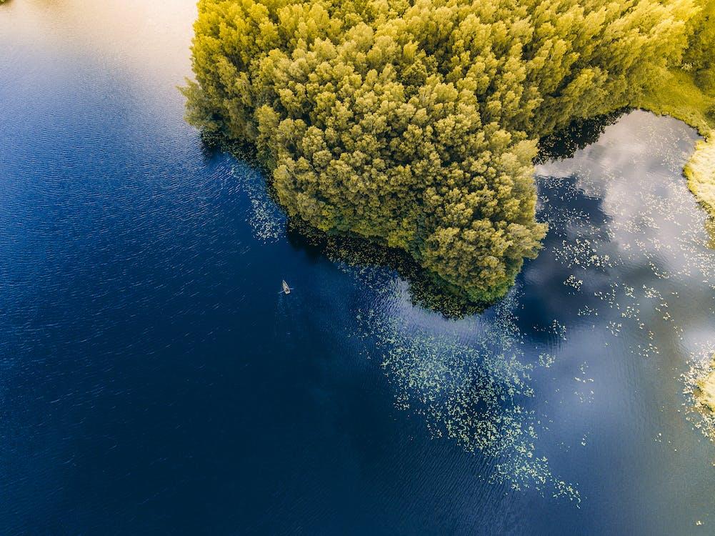 aerofotografia, água, árvores