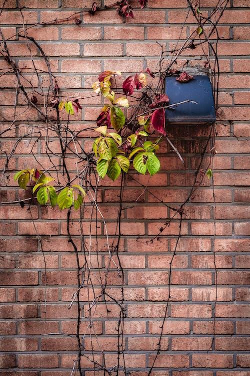 คลังภาพถ่ายฟรี ของ กำแพงอิฐ, ธรรมชาติ