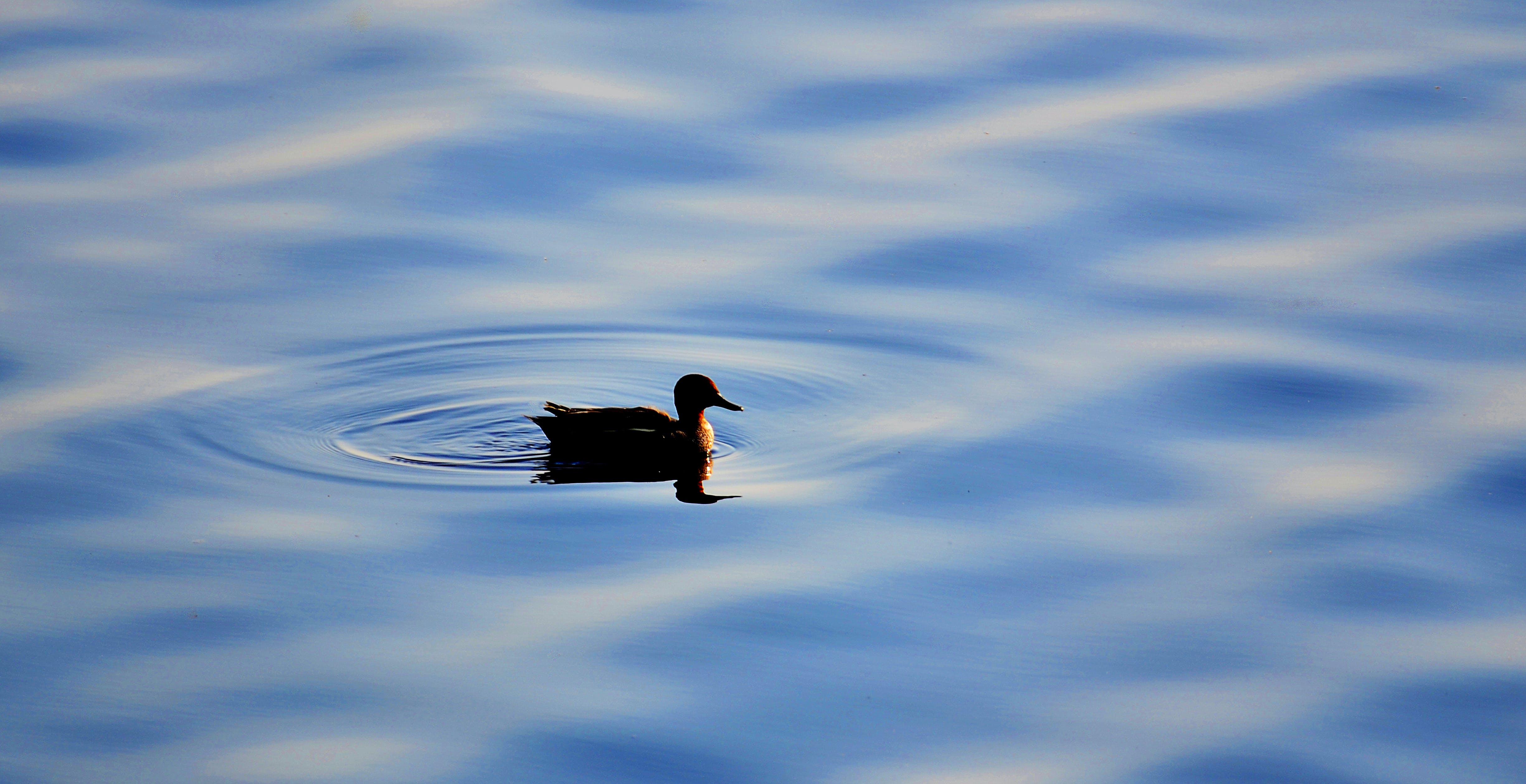 Foto d'estoc gratuïta de # natura # ocells