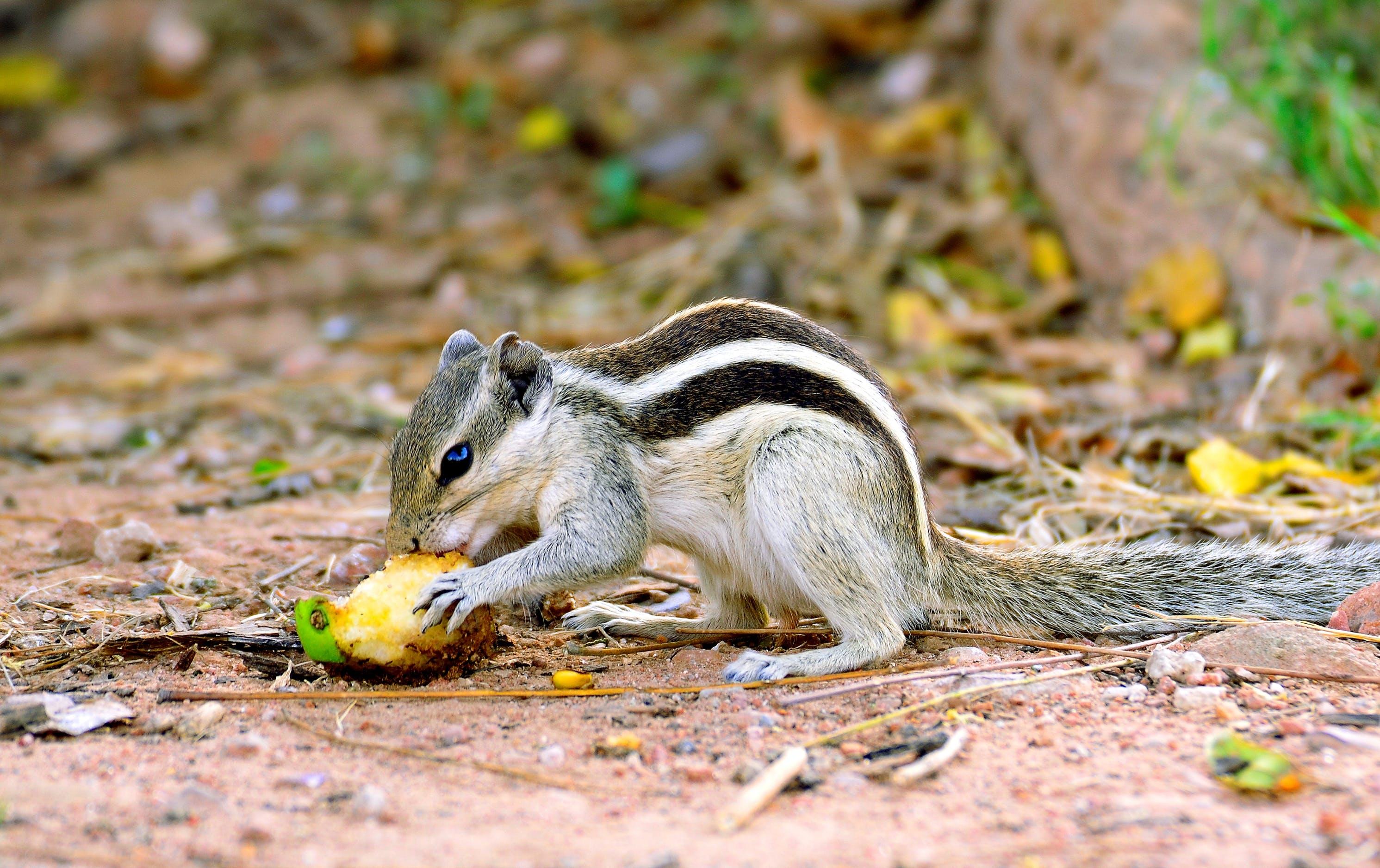 Free stock photo of #nature#wildlife#animals#jungle