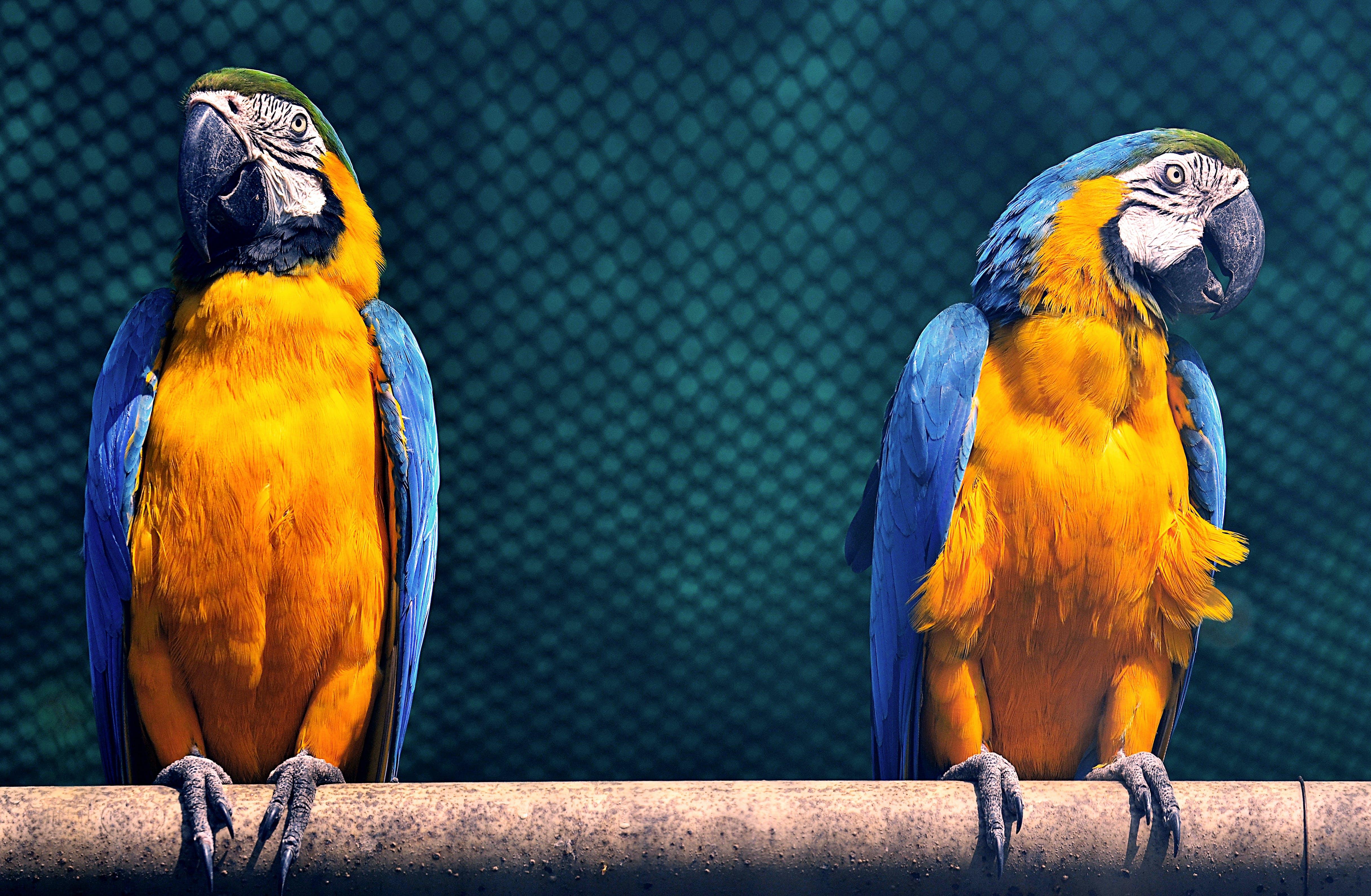 Amerika papağanı, egzotik, hayvanat bahçesi, hayvanlar içeren Ücretsiz stok fotoğraf
