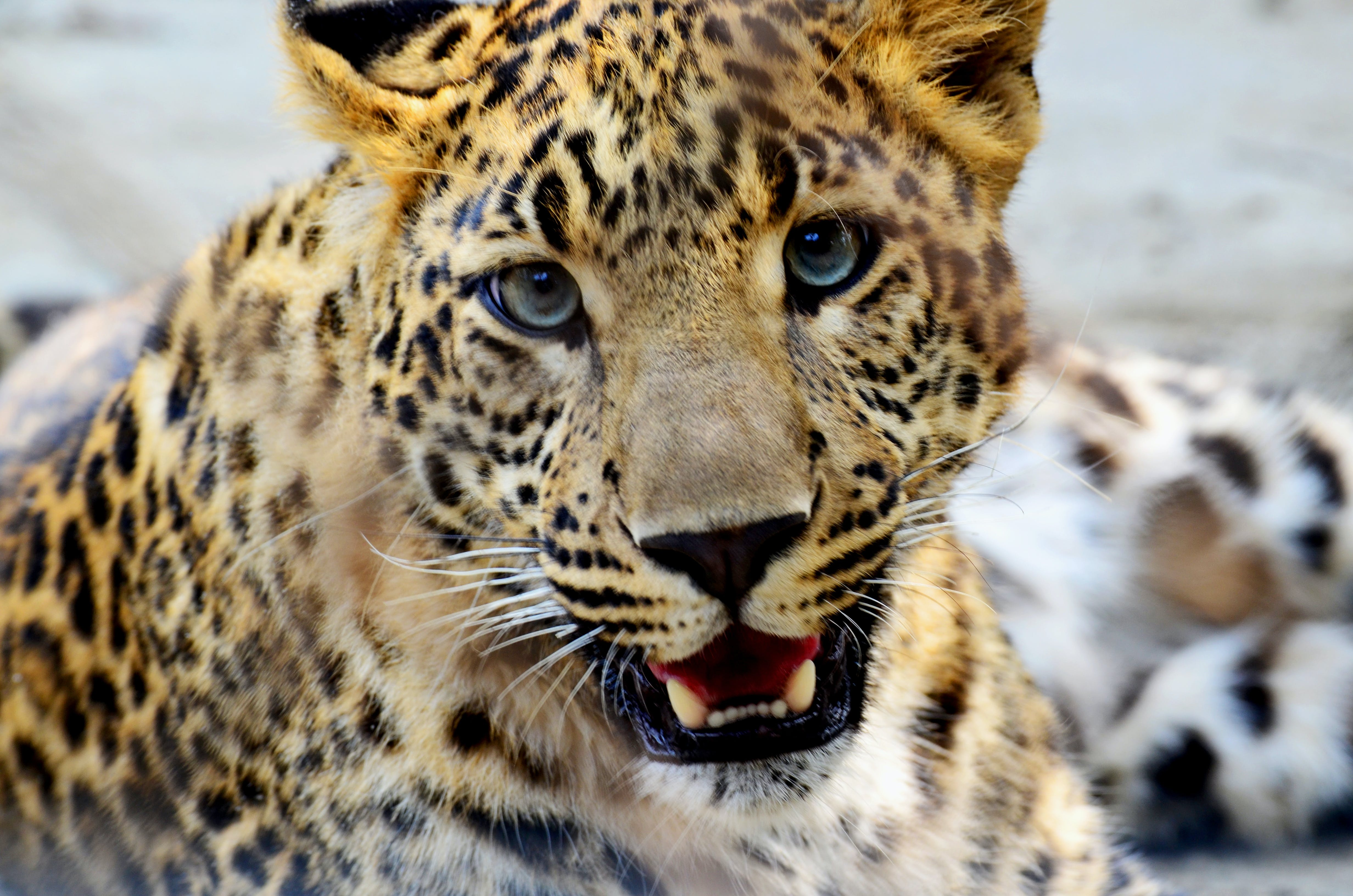 Foto d'estoc gratuïta de # natura # vida silvestre # animals # selva