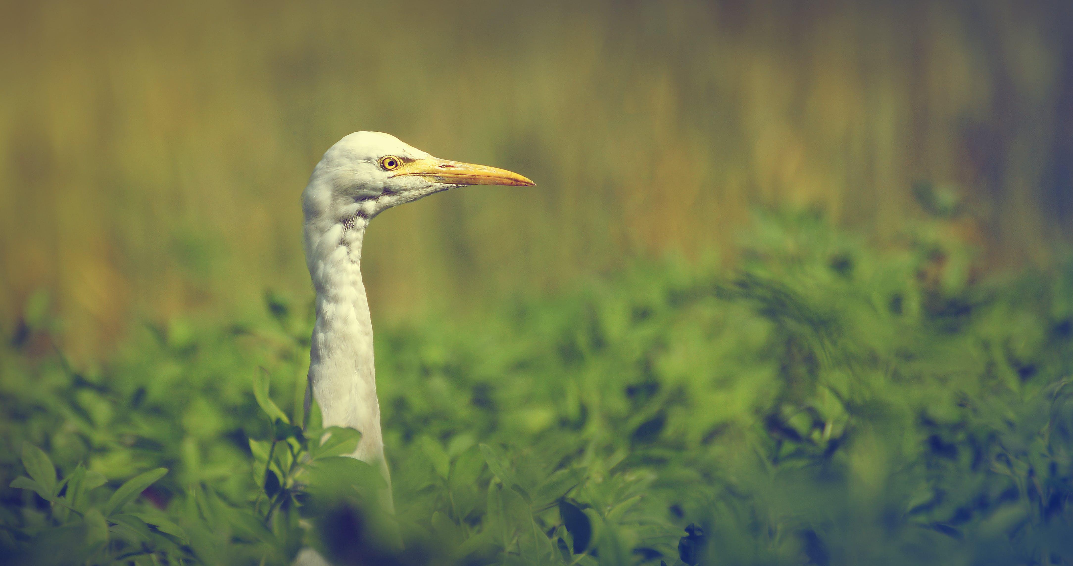 Foto d'estoc gratuïta de # natura # ocells # animal