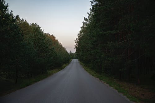 Ingyenes stockfotó aszfalt, erdő, fenyőfák, kora reggel témában