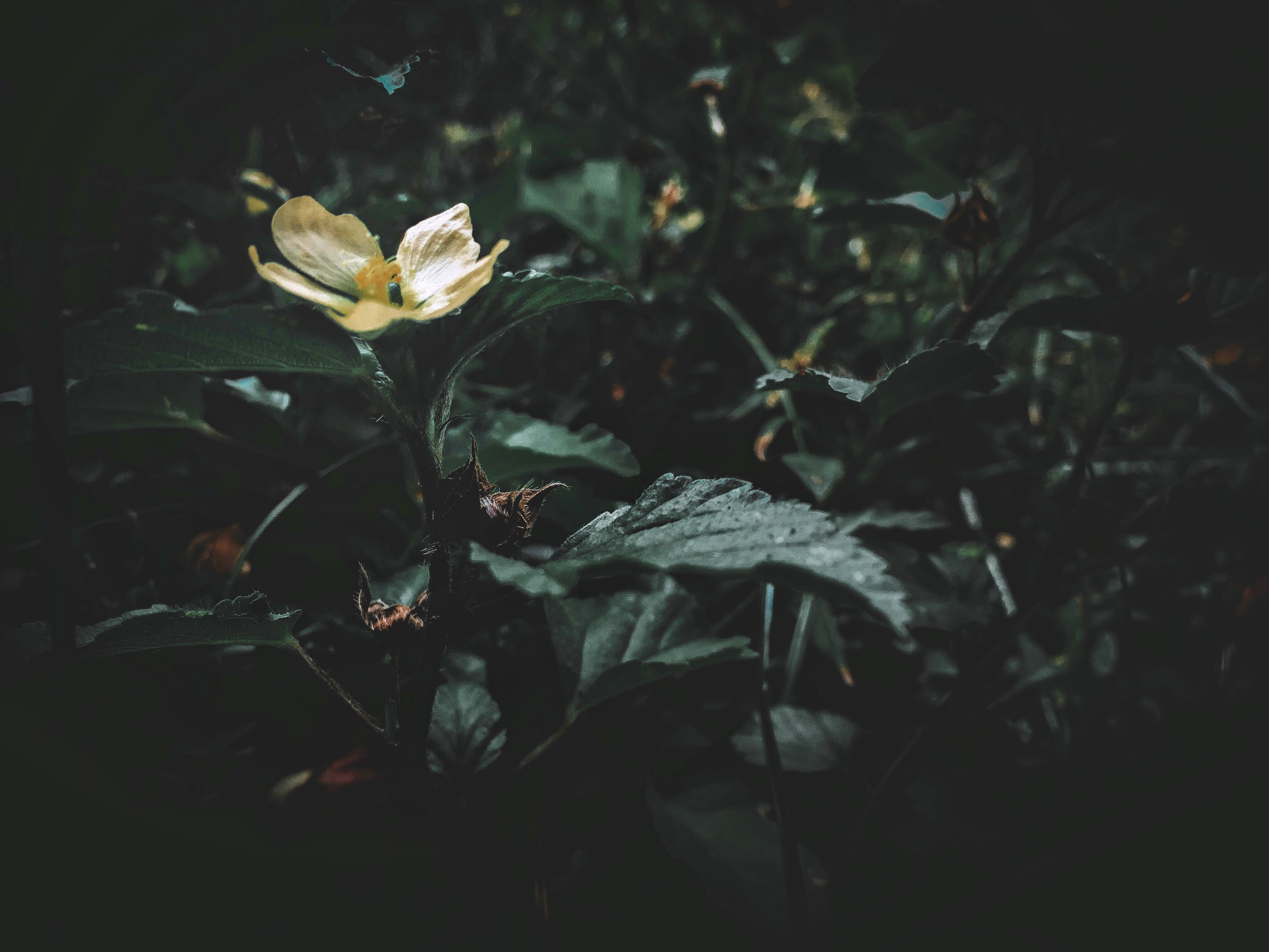 Free stock photo of daily, flowers, green, nature