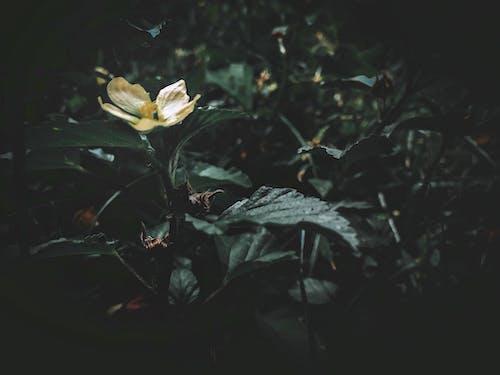 คลังภาพถ่ายฟรี ของ ดอกไม้, ดอกไม้สีเหลือง, ธรรมชาติ, ประจำวัน