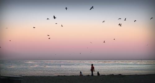 çocuklar, gün batımı, martılar, okyanus içeren Ücretsiz stok fotoğraf