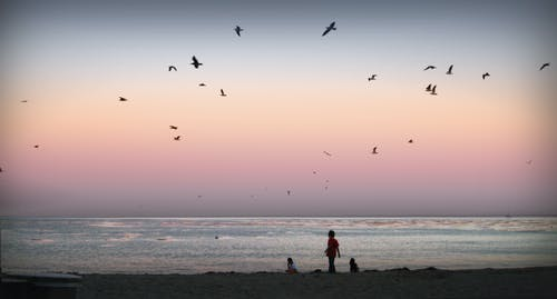 Kostenloses Stock Foto zu kinder, möwen, ozean, sonnenuntergang