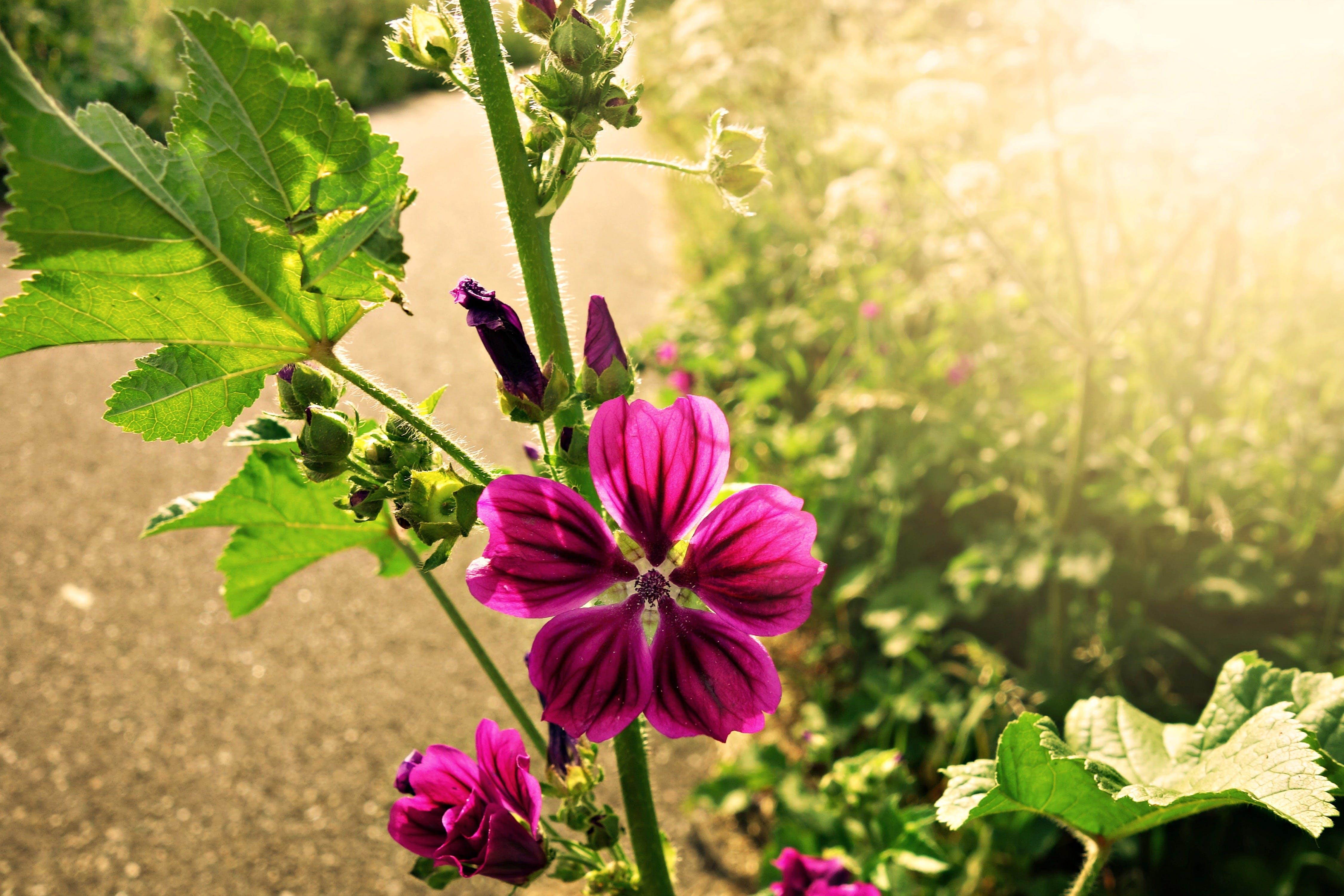 of bloom, flower, flowers by the roadside, Holland