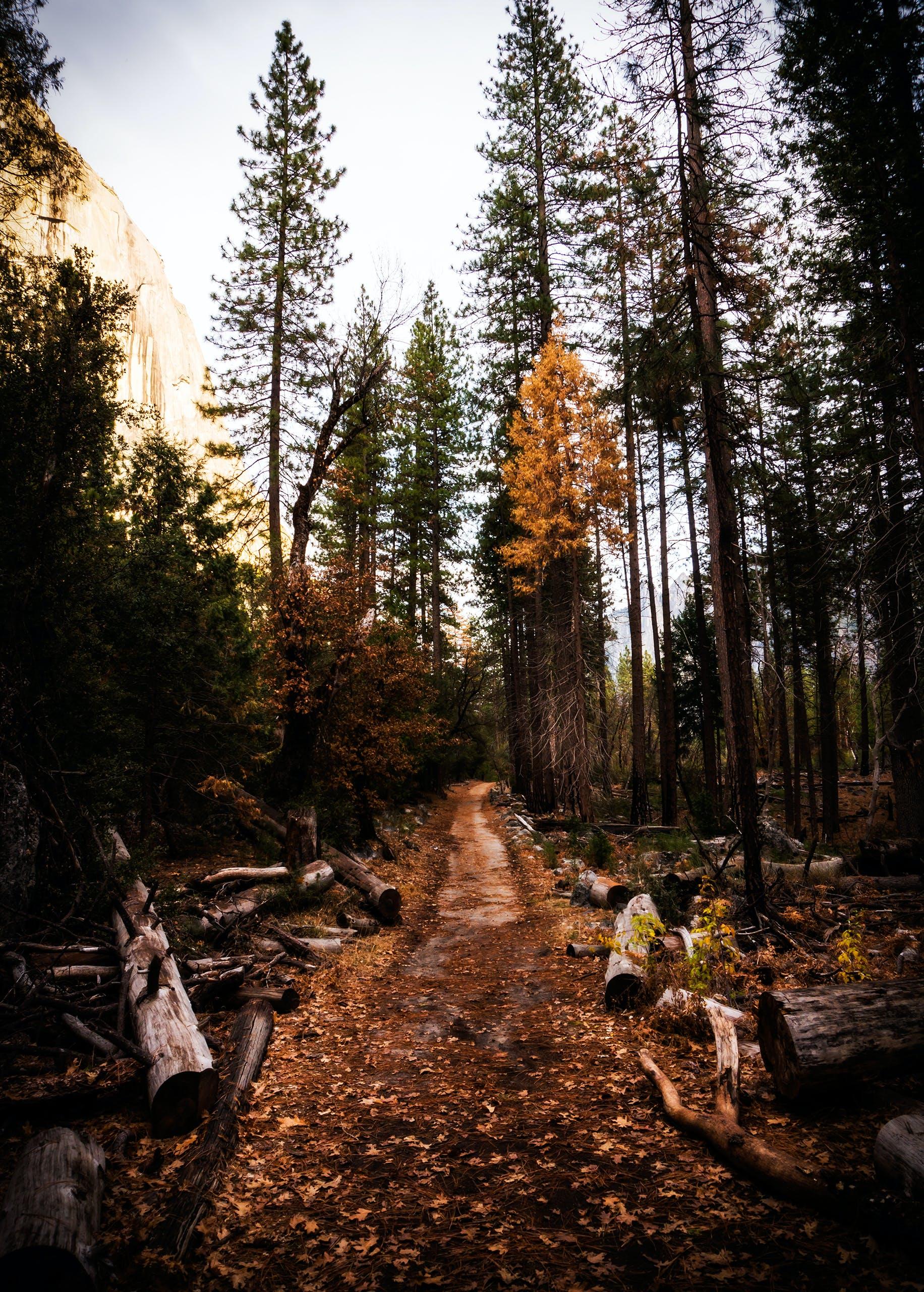 Gratis arkivbilde med bartre, dagslys, eviggrønn, fallne trær