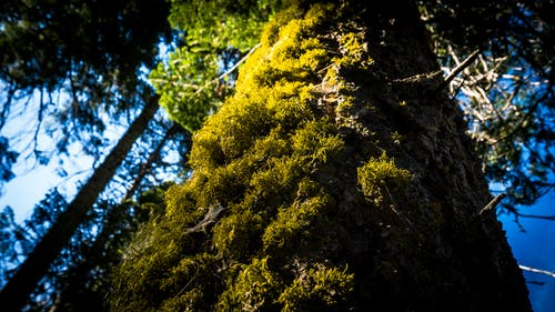 Free stock photo of forrest, moss, tree