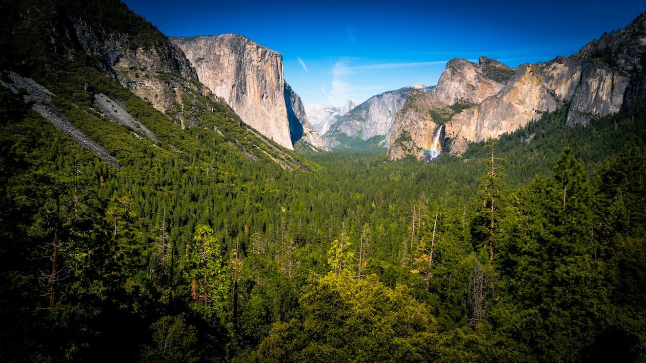 alberi, boschi, cascata