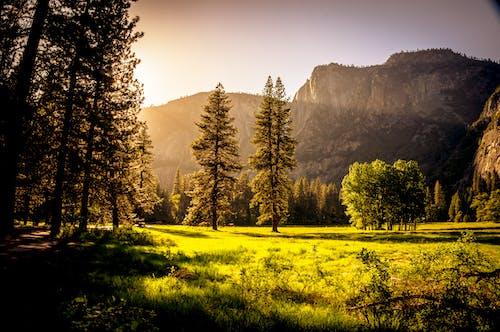 Gratis lagerfoto af bane, bjerge, dis, græs