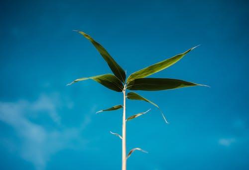 Kostenloses Stock Foto zu blauer himmel, himmel, klarer himmel, pflanze