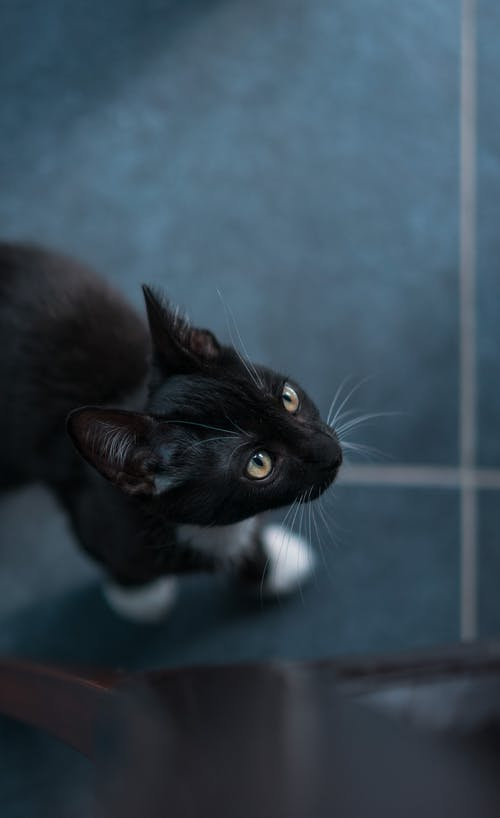 Selective Focus Photography Of Tuxedo Cat