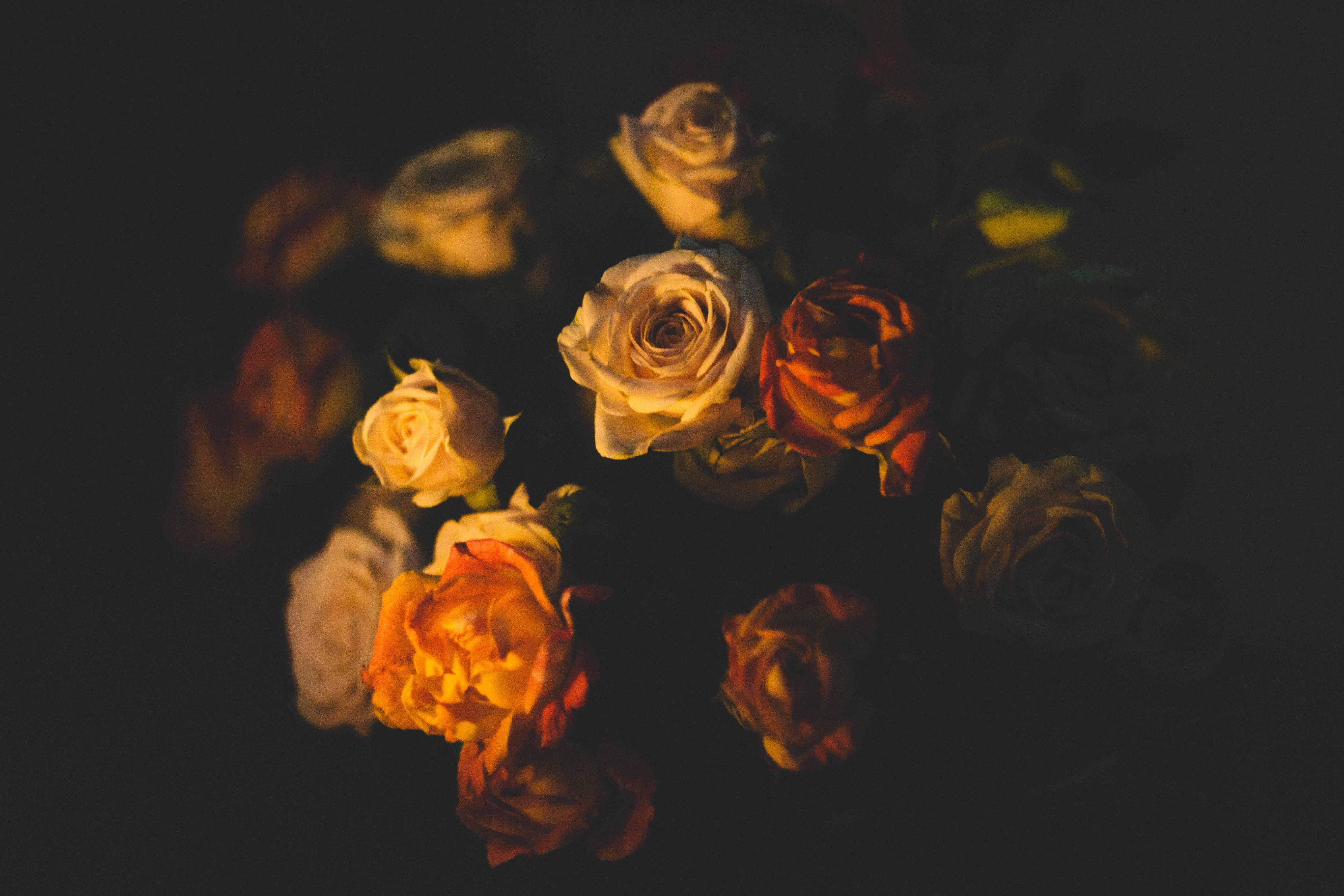 Foto Stok Gratis Tentang Alam Background Hitam Bunga Bunga