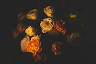 light, nature, flowers