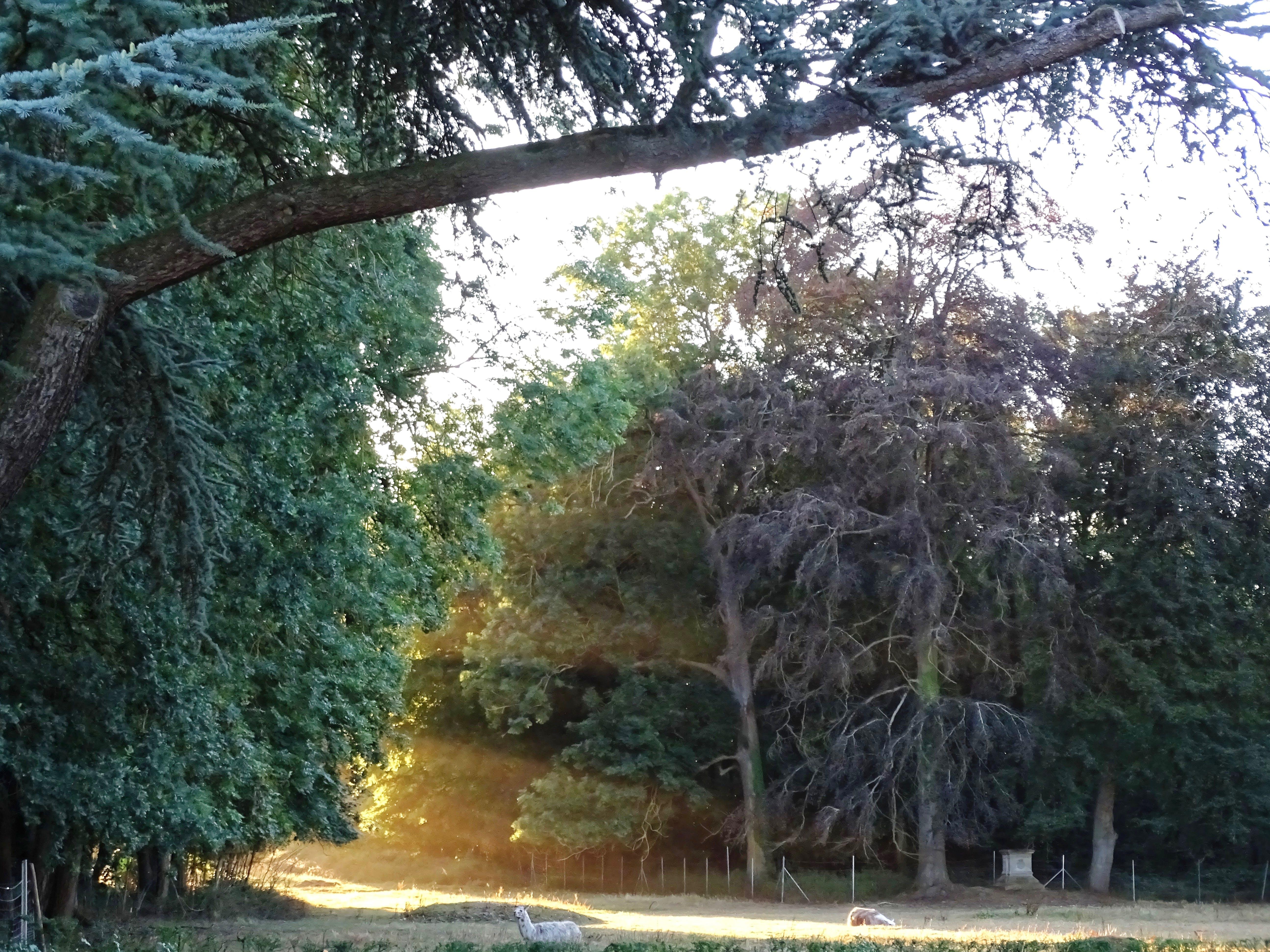Free stock photo of parc, region, soleil