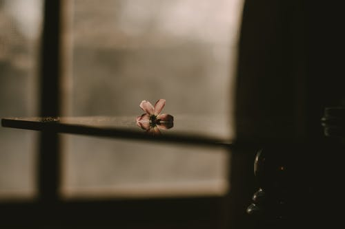 Fotobanka sbezplatnými fotkami na tému bezútešný, flóra, kvet, lupene