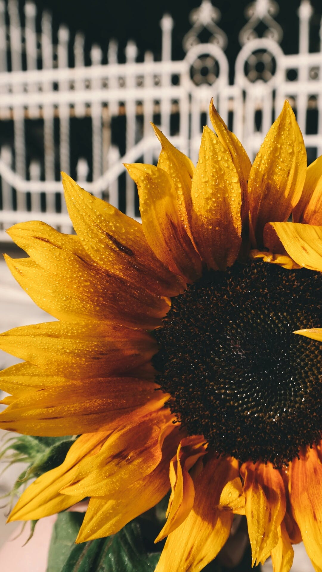 Yellow and Black Petaled Flower
