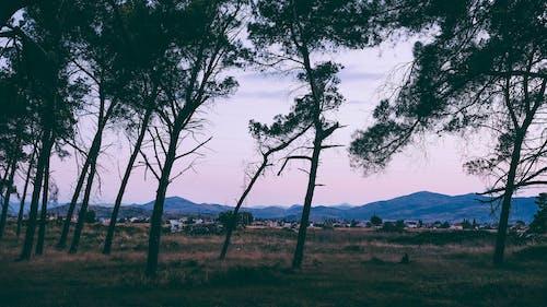 Základová fotografie zdarma na téma chlad, fialová, hory, krajina
