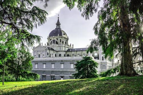 Immagine gratuita di alberi, antico, architettura, edificio
