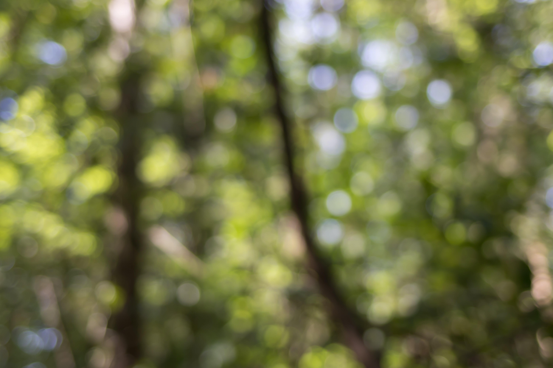 Kostenloses Stock Foto zu blick in die natur, natur, wald