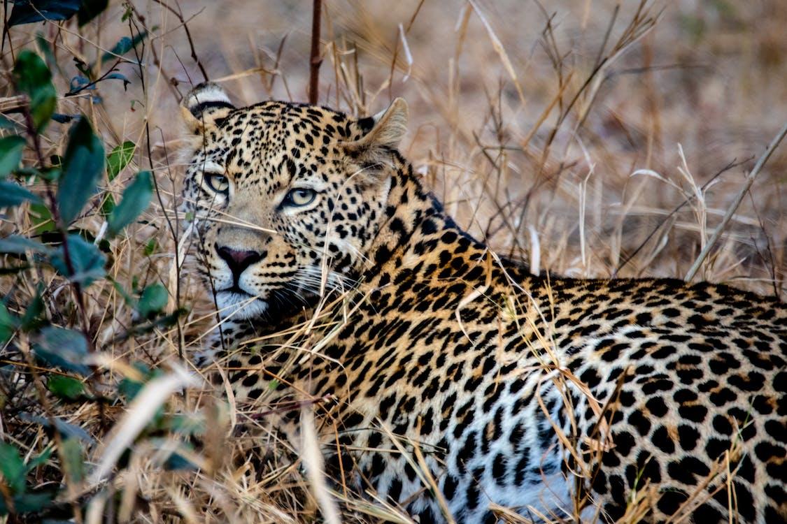 動物, 危險, 叢林