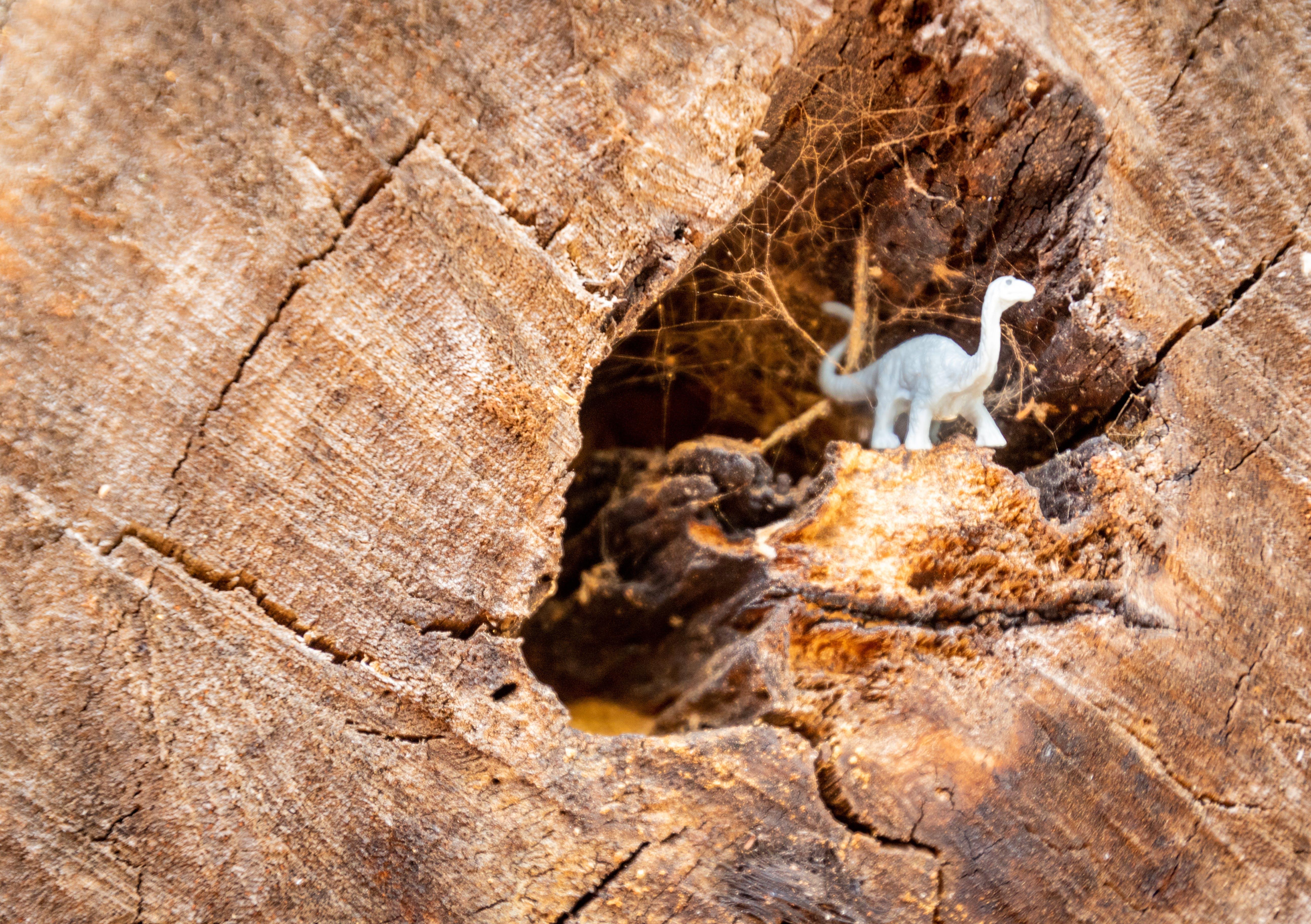 White Dinosaur Figurine on Wood Log