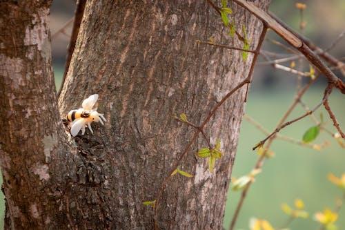 Ilmainen kuvapankkikuva tunnisteilla eläin, hämähäkki, hauska, hyönteinen