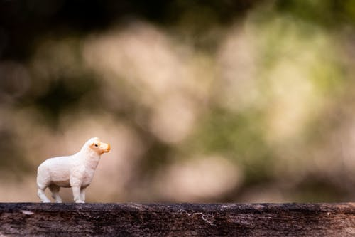 Shallow Focus Photography of White Sheep Figure